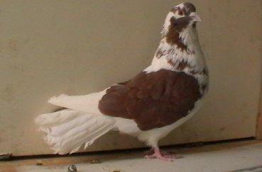 Николаевская птица