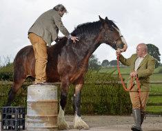 Лошадь очень больших размеров