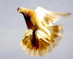 Бойный пернатый грациозно кружит в воздухе