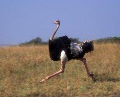 Птица во время бега