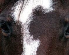 Лошадиный взгляд
