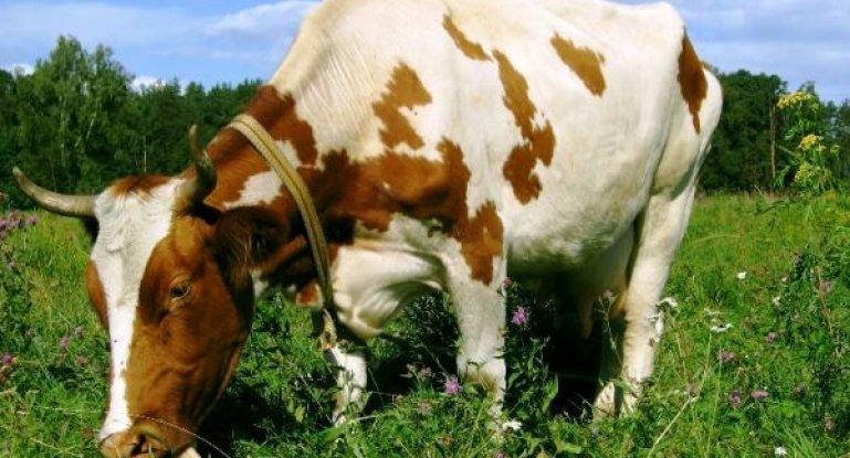 Интересная витаминная подкормка скота в зимний период