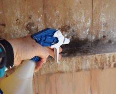 Влажная уборка курятника при помощи распылителя