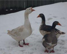 Линда гуляют зимой