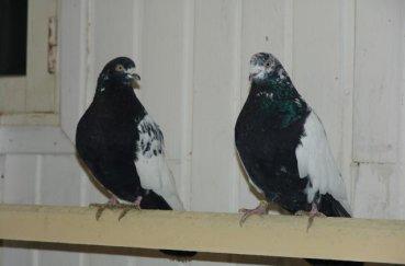 Свердловские птицы