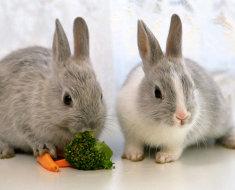 Два серых кроля с морковью