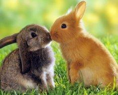 Дружелюбные декоративные кролики