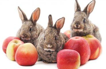 Длинноухие грызуны с удовольствием едят яблоки