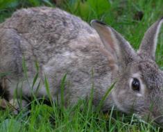 Крольчонок на прогулке