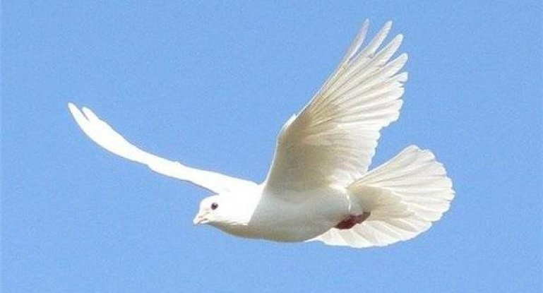 Энрофлон для голубей инструкция по применению