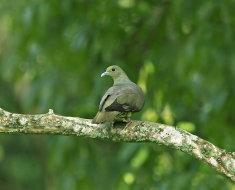 Зеленая африканская птица