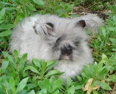 Кролик на природе