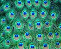 Шикарные перья птицы