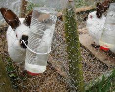 Кролик собирается пить