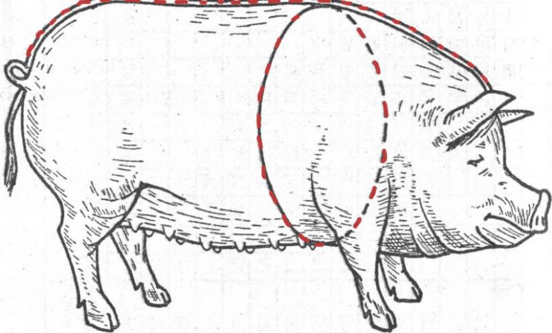 Измерение веса свиньи