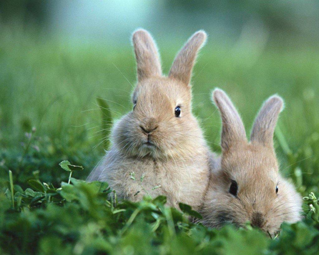 Два кролика в траве