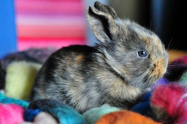 Пятнистый кролик в лоскутах