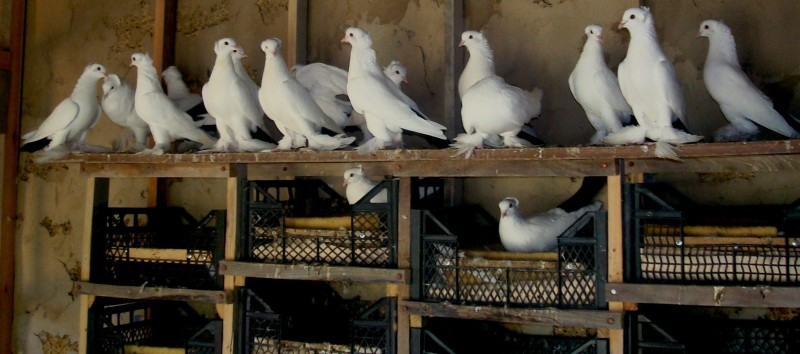 Гнезда для голубей своими руками