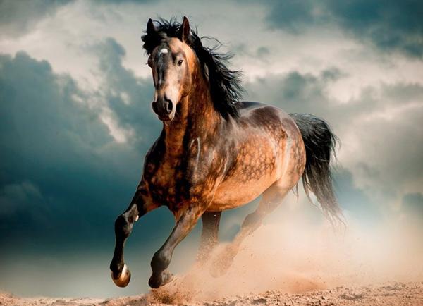 Конь мчится по полю