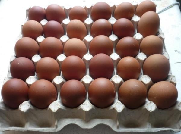 Яйца Вельзумера