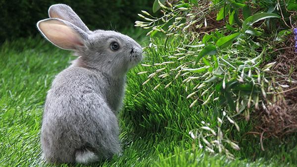 Кролик смотрит на траву