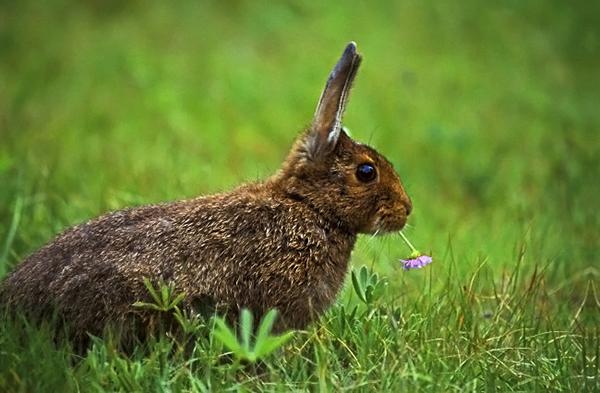 Ушастик ест цветок