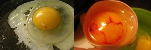 Кровь на желтке куриного яйца
