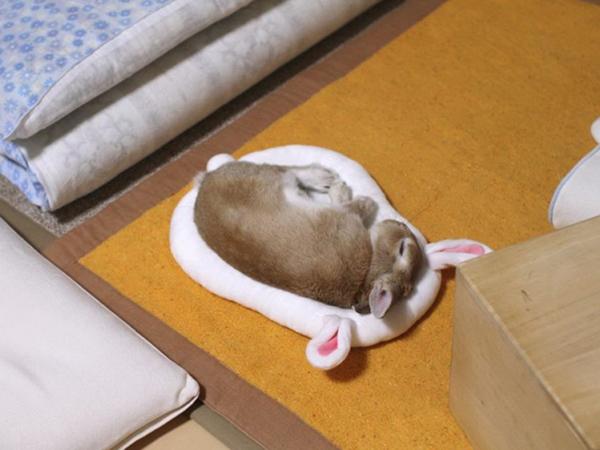 Спящий на подушке пушистик