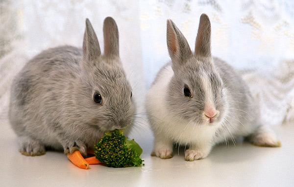 Два ушастика с морковью