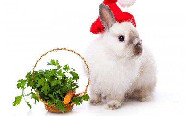 Кролик, зелень и морковка