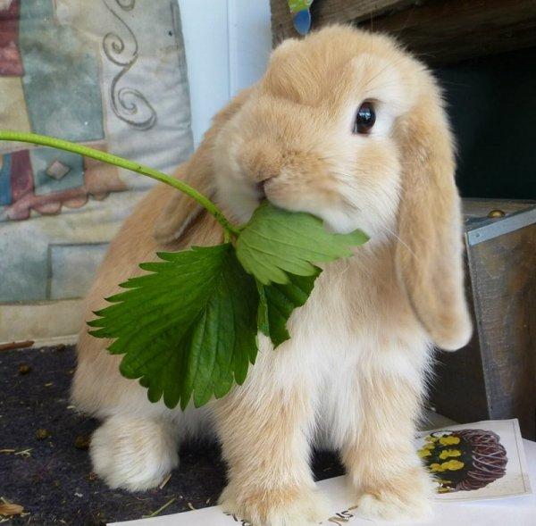 Кролик, жующий крапиву