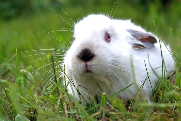 Белый кролик в траве