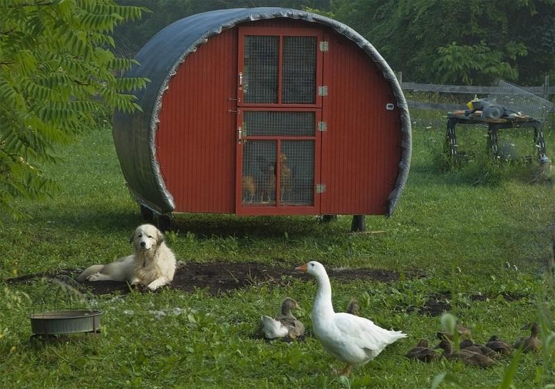 Собака охраняет птиц