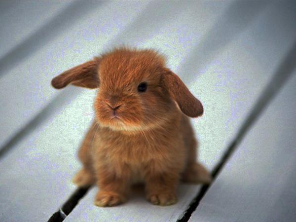 Рыжий кролик на полу