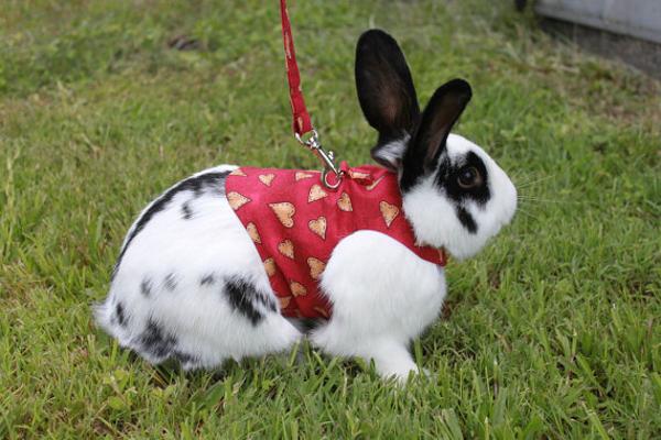 Прогулочная одежда кролика