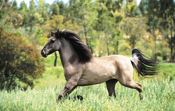 Соррайя - одна из самых дорогих лошадей