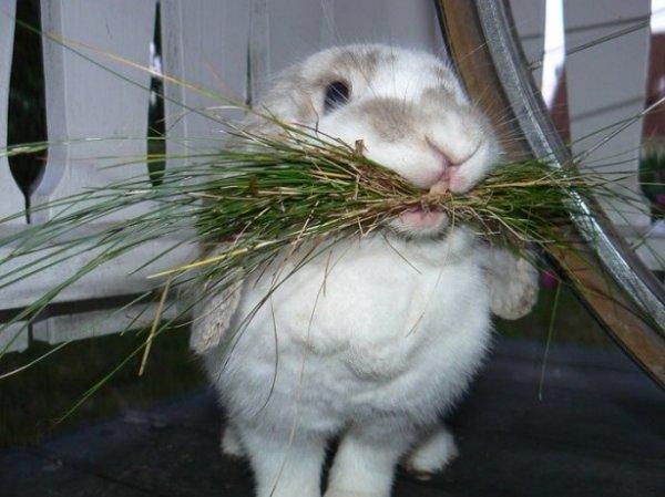 Кролик жует сено