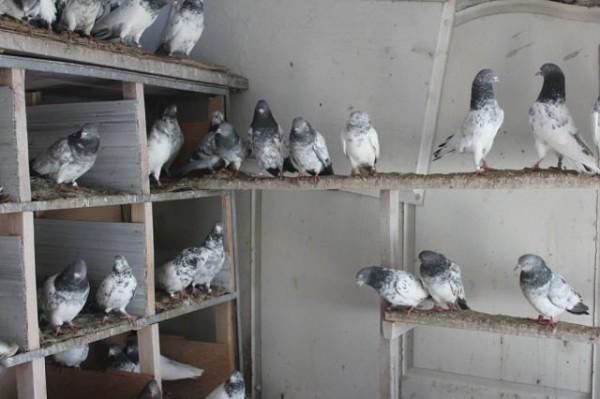 Дом для голубей сделанный своими руками