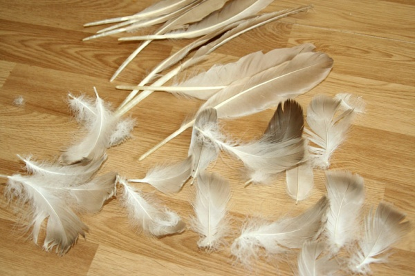 Гусиные перья