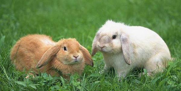 Два кролика на траве