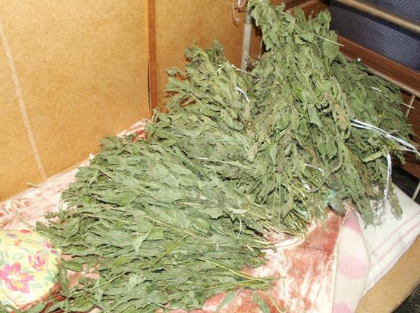 Заготовка крапивы на зиму