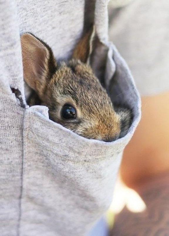 Кролик спрятался в кармане