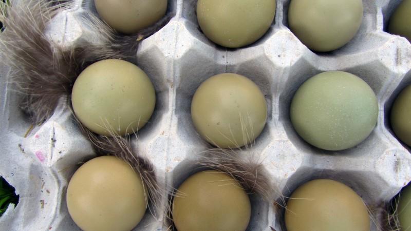 Фазаньи яйца в бумажном лотке