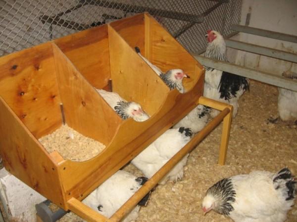Самодельное куриное гнездо
