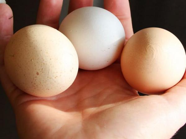 Яйца кур Геркулес