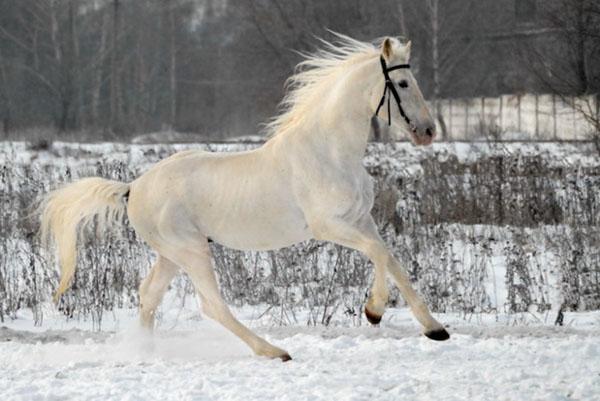 Русский красавец в зимнем поле