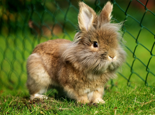Пушистый кролик на траве
