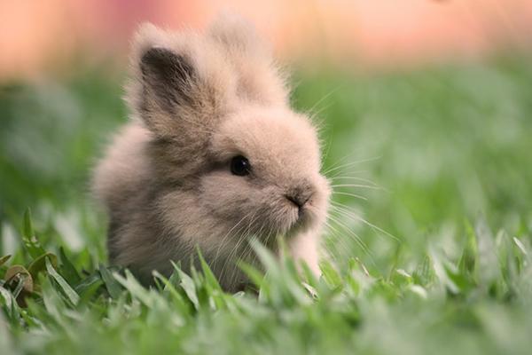 Бежевый крольчонок в траве