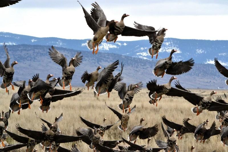 Птицы взлетают