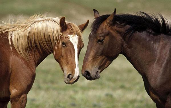 Два коня в поле